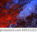 The crescent moon over the branches and leaves and the illuminated autumn leaves in the dusk 69531323