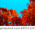 Clear autumn sky blue and autumnal red shades 69531324
