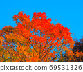 Clear autumn sky blue and autumnal orange shades 69531326