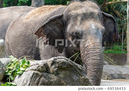 動物 台北市動物園 台北木柵動物園 大象 69536433
