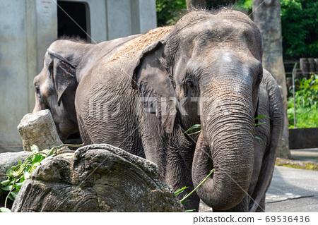 動物 台北市動物園 台北木柵動物園 大象 69536436