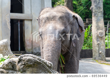 動物 台北市動物園 台北木柵動物園 大象 69536449