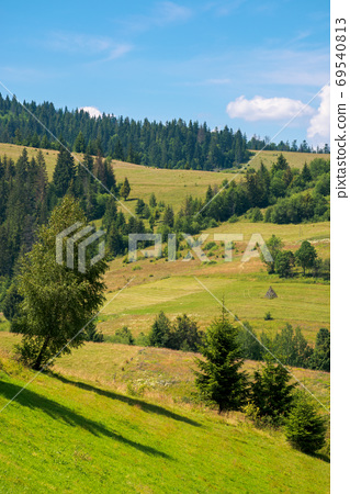 rural fields on a sunny summer day. trees on the grassy hills. b 69540813