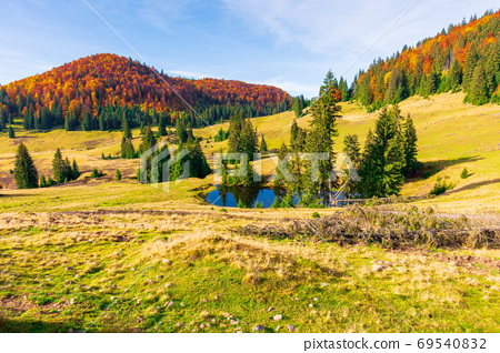 autumn landscape in mountains. fir trees around the pond on the 69540832