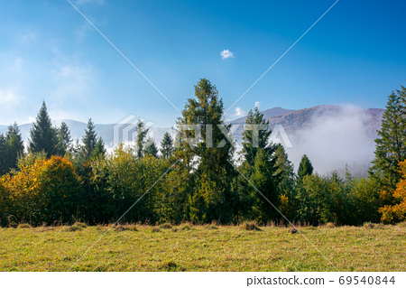 foggy autumn landscape. spruce trees on the meadow. mountain beh 69540844