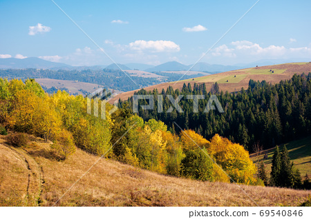 rural landscape of carpathian mountains in autumn. trees in yell 69540846