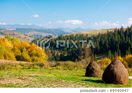 rural landscape of carpathian mountains in autumn. trees in yell 69540847