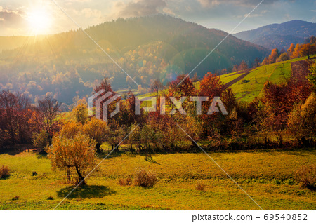 countryside autumn scene in mountains at sunset. trees in fall f 69540852