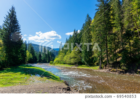 river scenery among the forest in mountains. beautiful alpine la 69540853