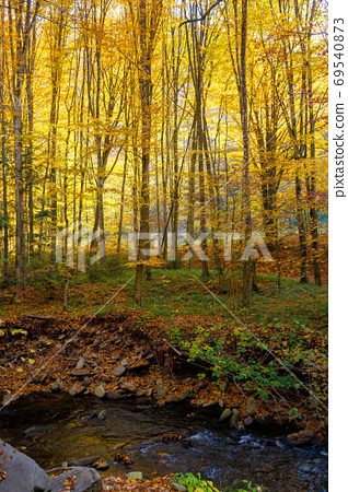 mountain water stream in the beech forest. beautiful nature scen 69540873