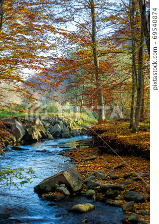 mountain water stream in the beech forest. beautiful nature scen 69540874