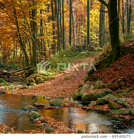 mountain river in autumn forest. rocks and fallen foliage on the 69540875