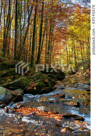 mountain river in autumn forest. rocks and fallen foliage on the 69540876
