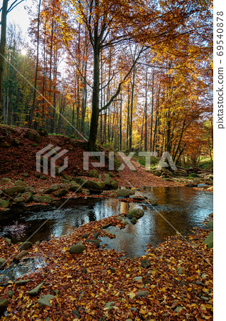 mountain river in autumn forest. rocks and fallen foliage on the 69540878