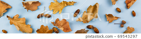 Leaves with acorns on a blue background. 69543297