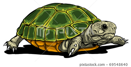 Turtle vector icon.Cartoon vector icon isolated on white background turtle. 69548640