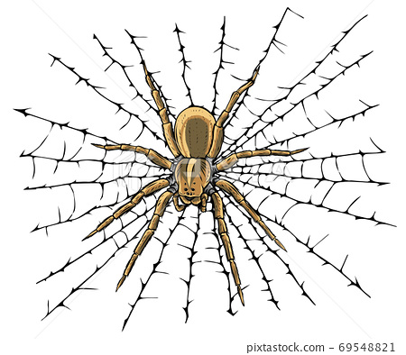 vector illustration hanging spider on web thread 69548821