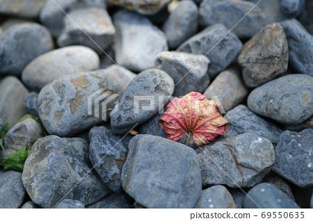 돌 위에 시든 단풍 나무 69550635