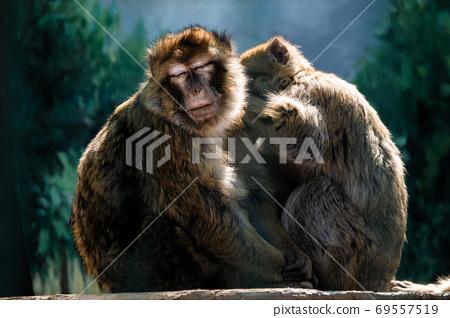 Portrait of a monkey in the wild 69557519