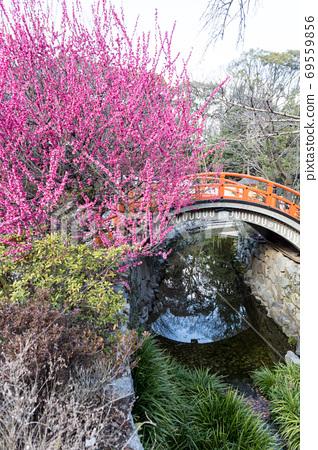 """Shimogamo Shrine, """"Korin no Ume"""" and """"Rinbashi"""" on the Mitarai River 69559856"""