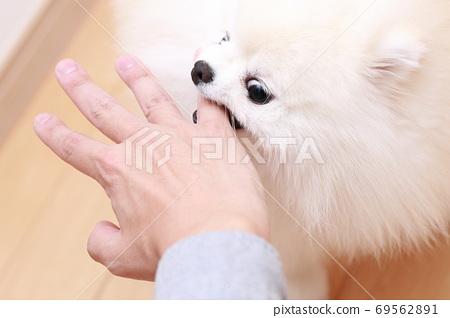 一個男人被他的狗博美犬咬傷了手 69562891