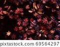 Fallen leaves 69564297