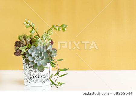 Mix of echeveria, crassula succulent plants arrangement in white pot on white table top ,yellow background 69565044