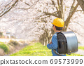 Back view of an elementary school boy looking at the cherry blossoms 69573999