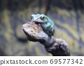 靜止不動的青蛙的魅力 69577342