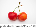 Close-up of two cherries 69579239