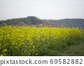 봄날 유채꽃 밭에서 69582882