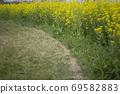 봄날 유채꽃 밭에서 69582883