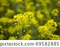 봄날 유채꽃 밭에서 69582885