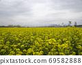봄날 유채꽃 밭에서 69582888