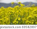 봄날 유채꽃 밭에서 69582897