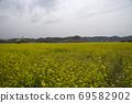 봄날 유채꽃 밭에서 69582902