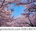 Sakuraharu Sky Kenrokuen Kanazawa Cherry Blossom Viewing 69618074