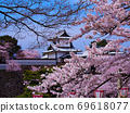 Sakuraharu Sky Kenrokuen Kanazawa Cherry Blossom Viewing 69618077