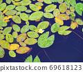Lotus pond Lotus leaf pond Mt. Rokko 69618123