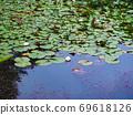 Lotus pond Lotus leaf pond Mt. Rokko 69618126