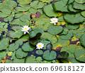Lotus pond Lotus leaf pond Mt. Rokko 69618127
