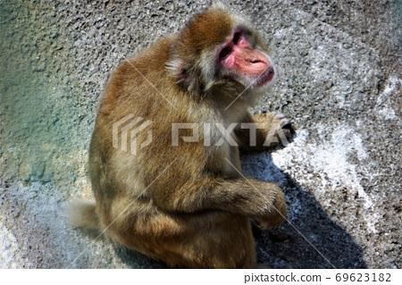"""영장류 · 원숭이 ~ """"히타치 神峰 동물원""""동물 대 집합 69623182"""