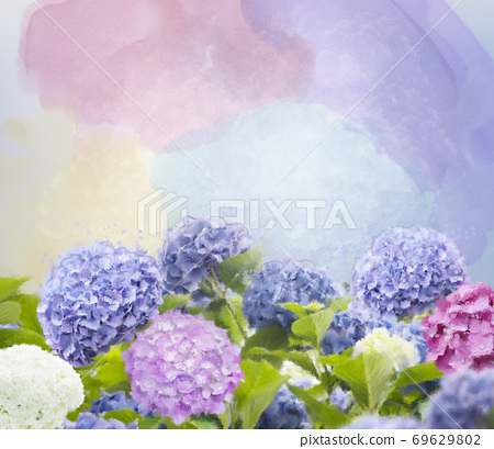 Colorful hydrangea flowers watercolor illustration. 69629802