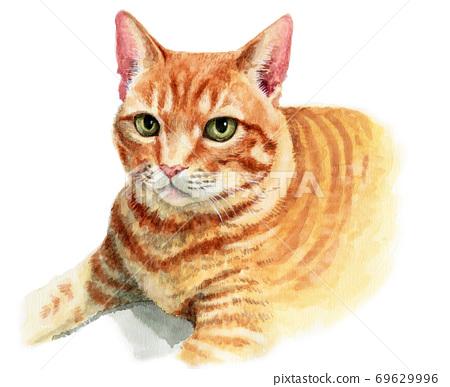 水彩畫的茶托貓臉 69629996