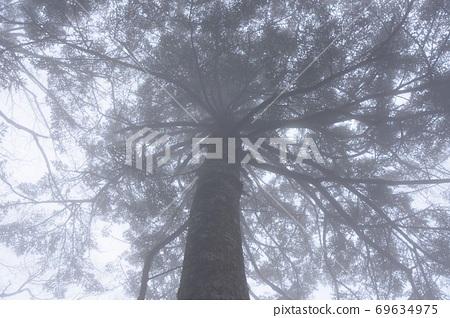 fog 69634975