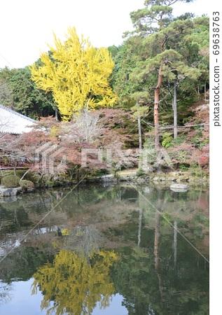 가을의 다이 고지 벤텐 연못에 비치는 은행 나무 69638763
