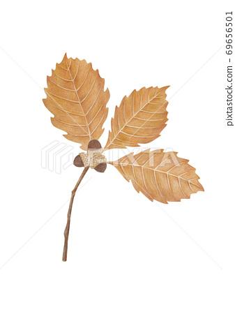 橡子樹枝 69656501