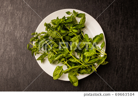 허브 바질 Organically grown herb basil leaves 69663584
