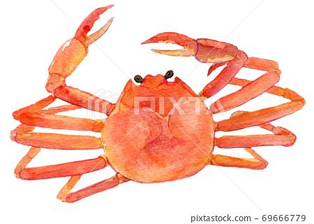 螃蟹水彩插圖 69666779