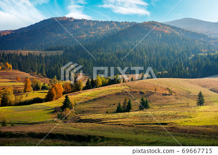 mountainous rural landscape in autumn season. trees and fields on rolling hills. beautiful countryside afternoon scenery on a sunny day 69667715